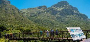 Проведите день на природе в Национальном ботаническом саду Кирстенбош