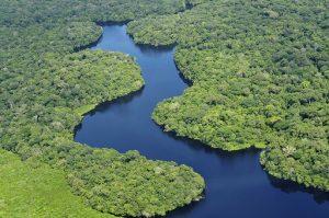 Дождевой лес Амазонки