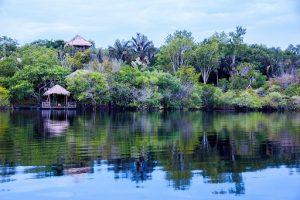 Затопленные леса в Амазонке